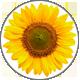 SunflowerOil_SonnenblumenOel55082234dd4fe