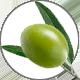 Squalane_Olive5508222f82de4