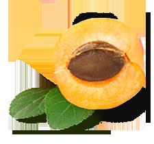 Apricot_L