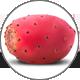kaktusfeige_prickly-pear