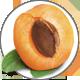 Aprikose_Apricot550821f8866d7